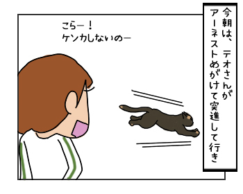 24052017_cat3mini.jpg
