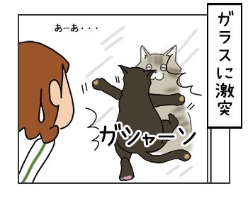 24052017_cat4mini.jpg