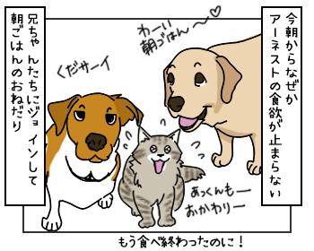 25052017_cat1mini.jpg