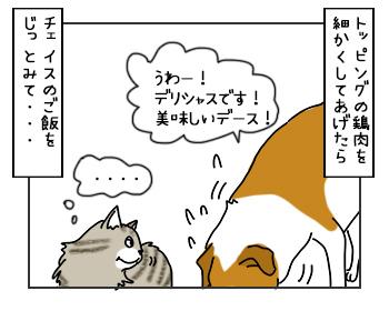 25052017_cat3mini.jpg