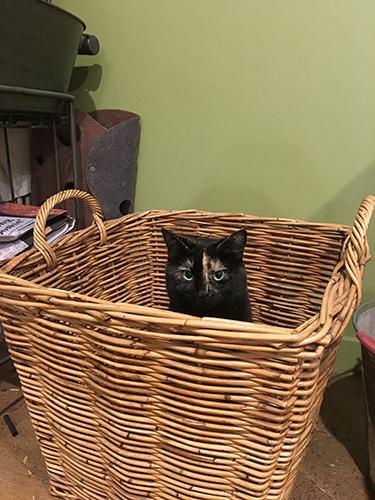 25062017_cat2.jpg