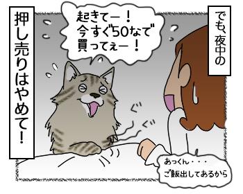 26062017_cat4mini.jpg