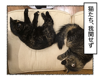 27062017_cat4.jpg