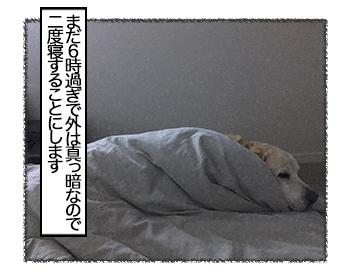 27062017_cat5.jpg
