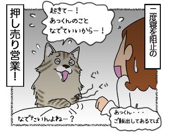 27062017_cat8.jpg