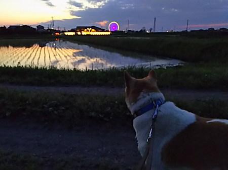 夕焼けを見るゴンタ