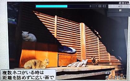 たくさんの猫を撮るときは画角を大きく