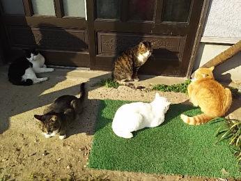 「ひぃふぅみぃ、猫がいっぱいだ。」と父が言う