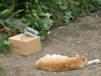 鳥の身柄を箱で保護したが、猫が箱から離れない!