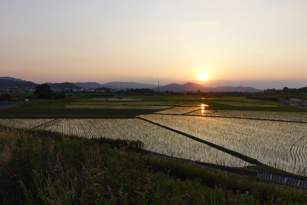 田んぼの夕日