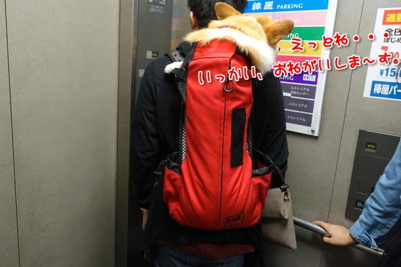 エレベーターおk
