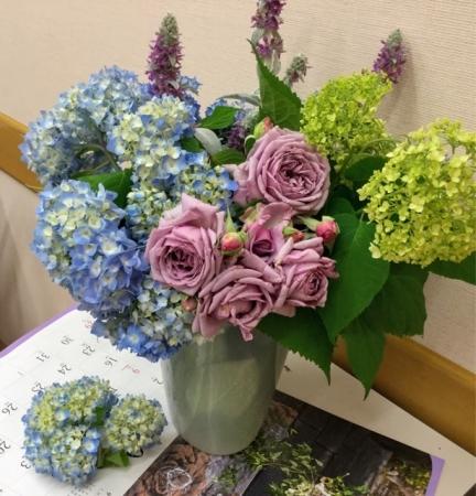 教室紫陽花