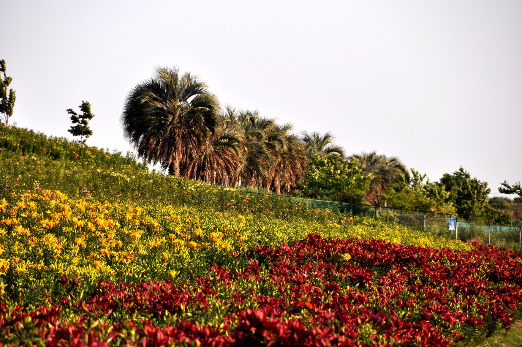 ③ゆり園の咲き誇るゆりたち