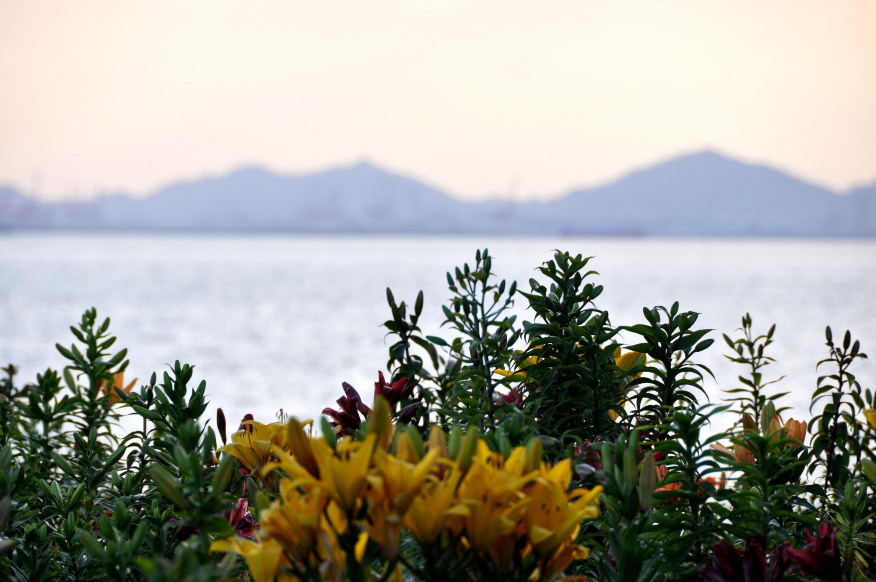 ⑤遠くに神戸アイランドを望む
