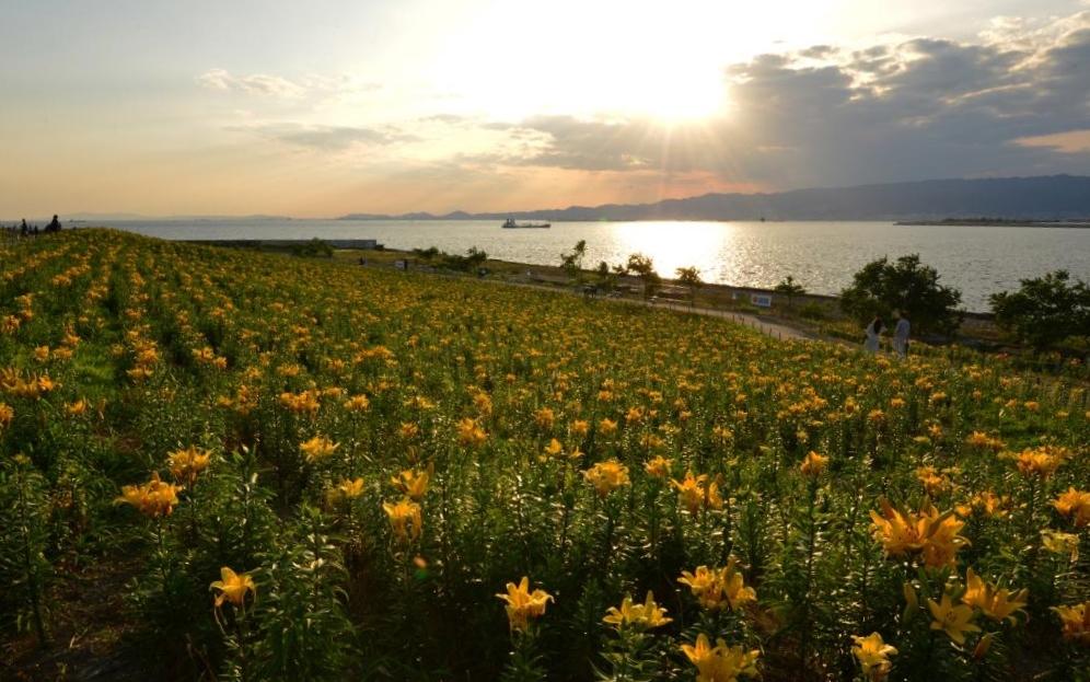 ⑦ゆり園の夕日