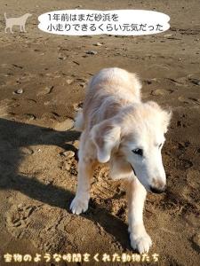 1年前はまだ砂浜を小走りできるくらい元気だった