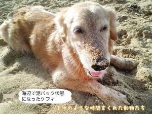 海辺で泥パック状態になったケフィ