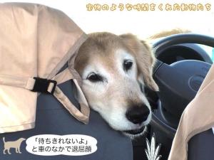 「待ちきれないよ」と車のなかで退屈顔