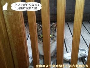 ケフィが亡くなって1月後に現れた猫