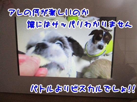 0502-08_2017050215184602b.jpg