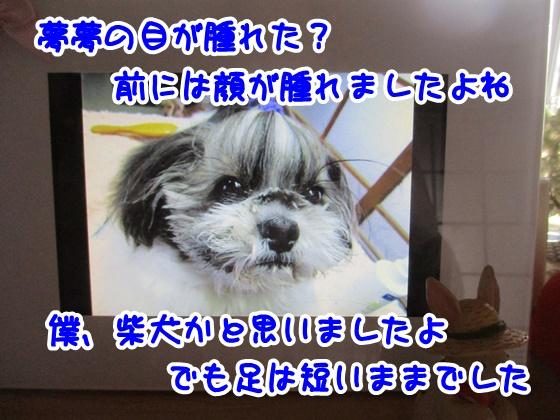 0511-08_201705111607094f1.jpg
