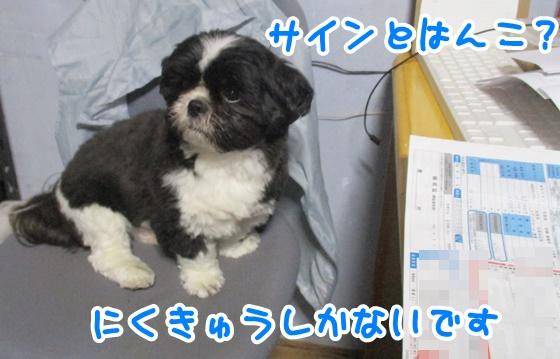 0513-01_20170513193209c9c.jpg