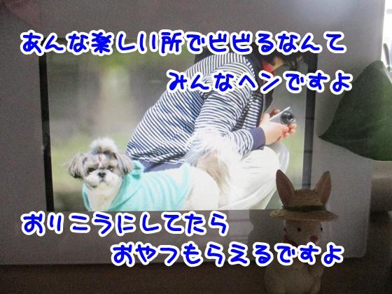 0519-12_20170519163011cae.jpg