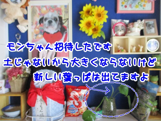 0601-01_20170601141629e1f.jpg