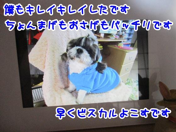 0628-07_201706281559276c4.jpg