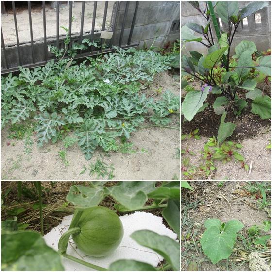 0620-野菜