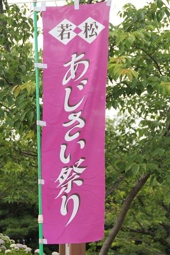 紫陽花1 2017-6-12-2