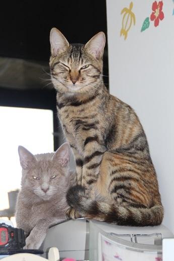 シーマ、ルキノ1歳