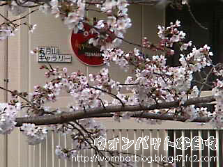 桜2016_0331_02