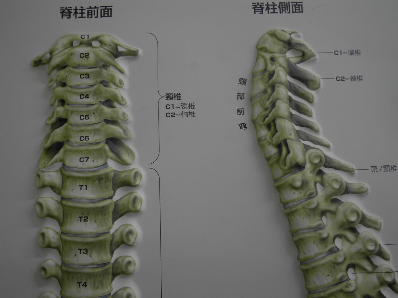 頚椎126