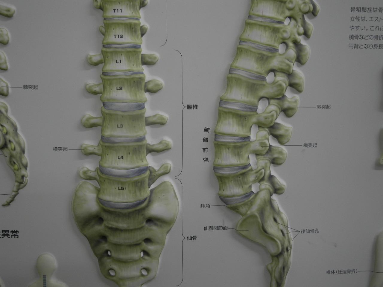 腰椎124