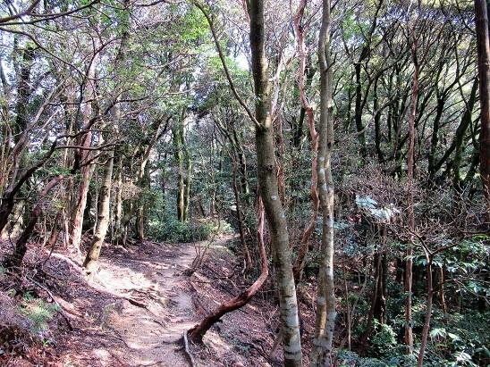 福智山の森