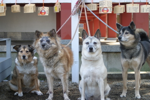 犬たち0125