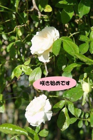 DSC06649_20170517201956551.jpg
