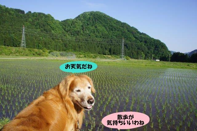 DSC06688.jpg