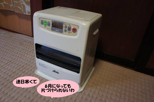 DSC06929.jpg