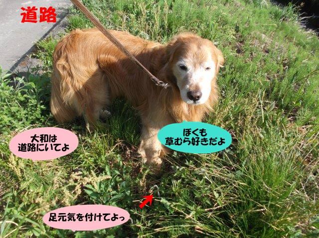 DSCF5460.jpg