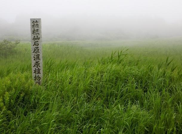 仙石原湿原 (2)