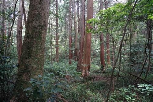 6神宮の森