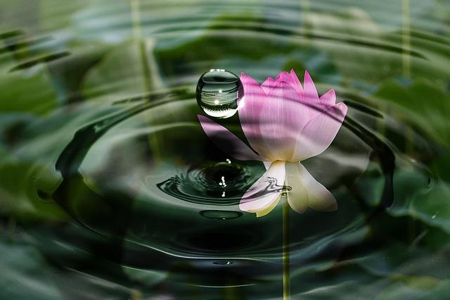 drop-of-water-2092495_640.jpg