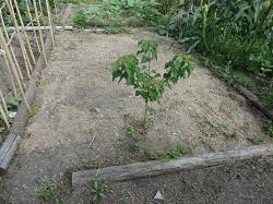 空き地になった畑