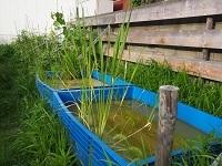 農園メンバーの稲作り7月3日