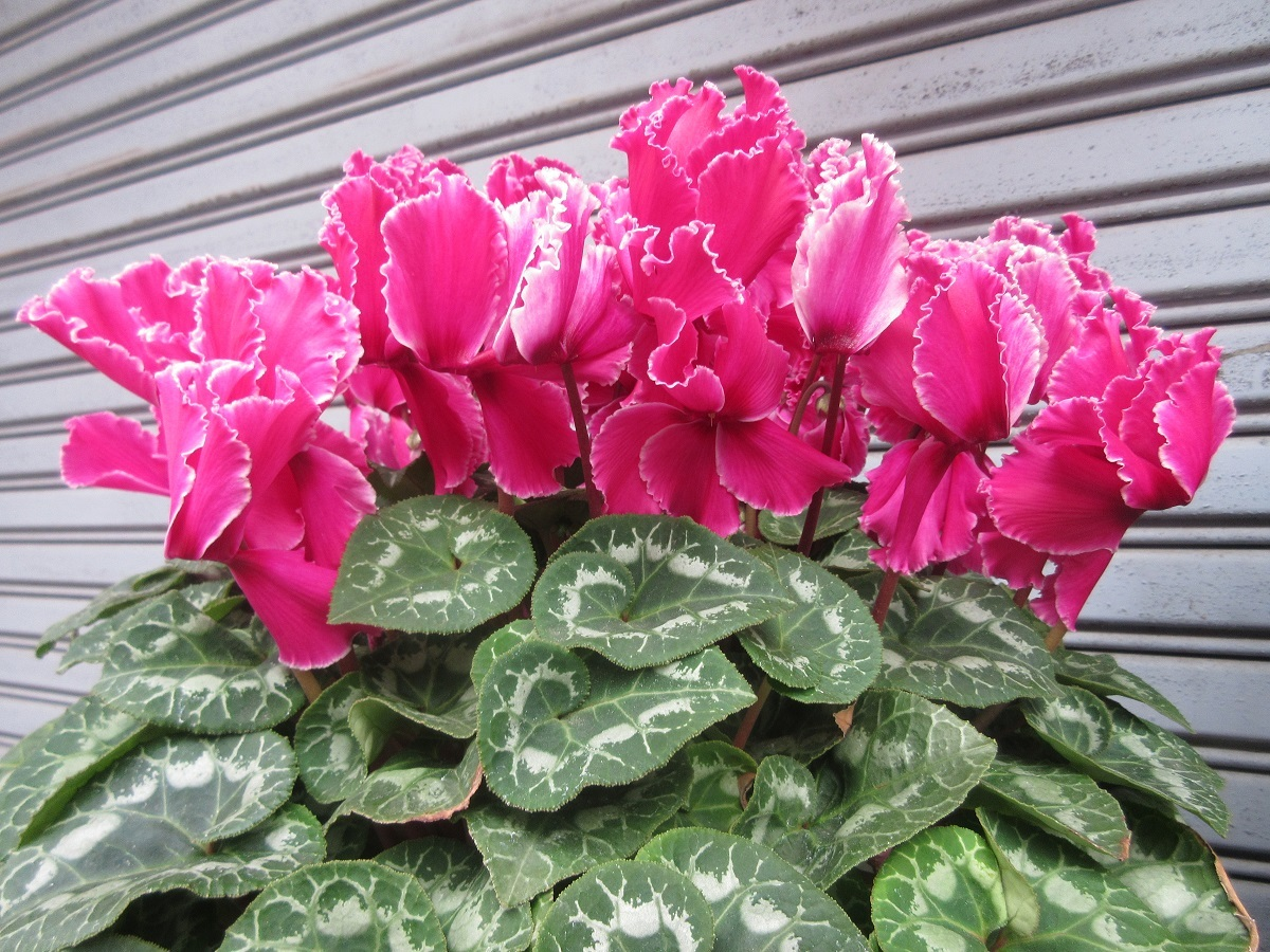 IMG_2259 花