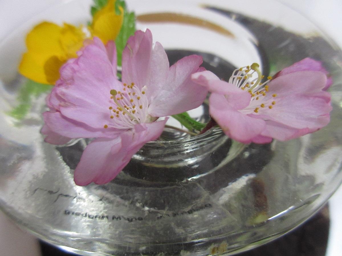 IMG_2273 花