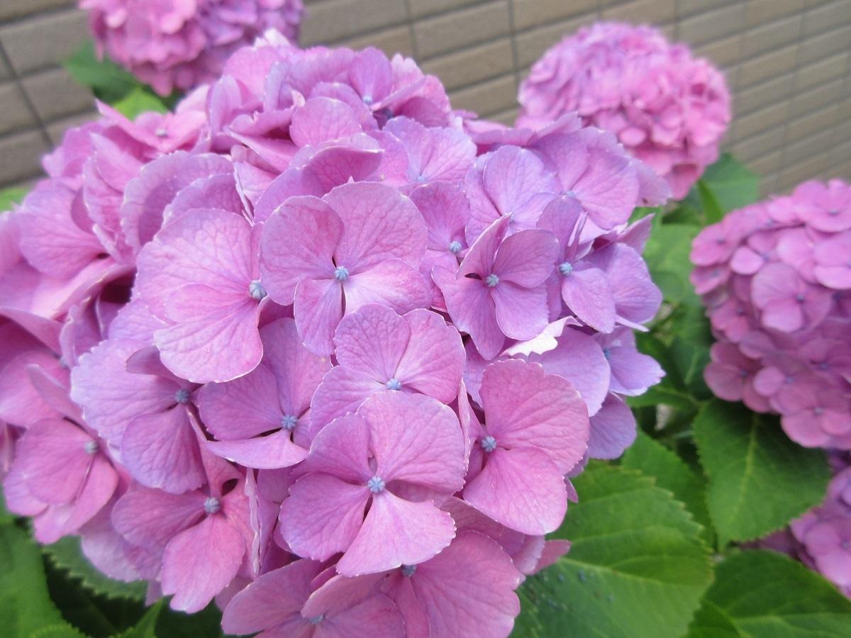 IMG_2347花