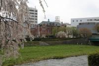 岩手銀行桜
